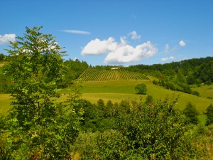 Slovenian wine country